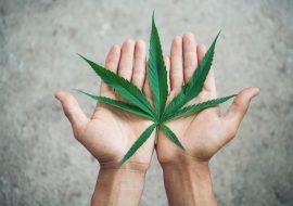 Lo que debes saber acerca de la aprobación del uso lúdico de la marihuana en México